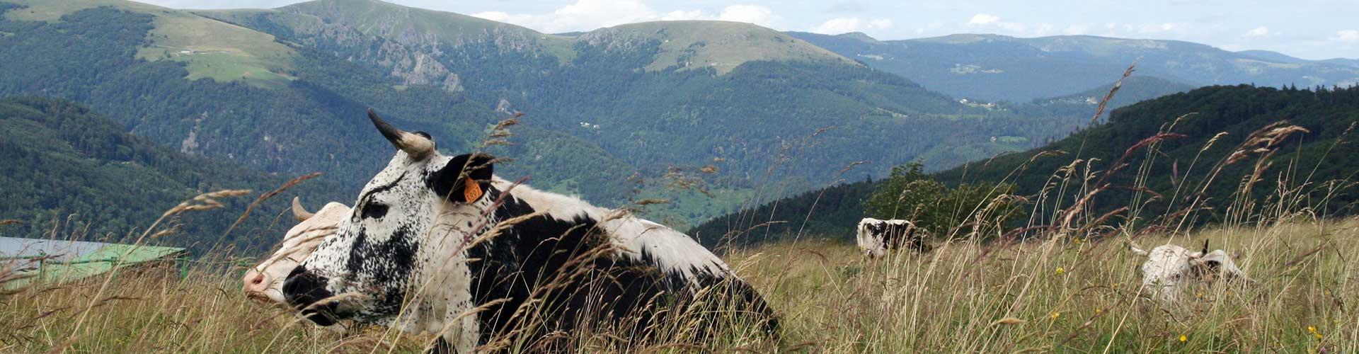 Vue du Schnepfenried vers le Kastelberg