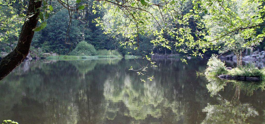 en été au lac du fiechboedlé