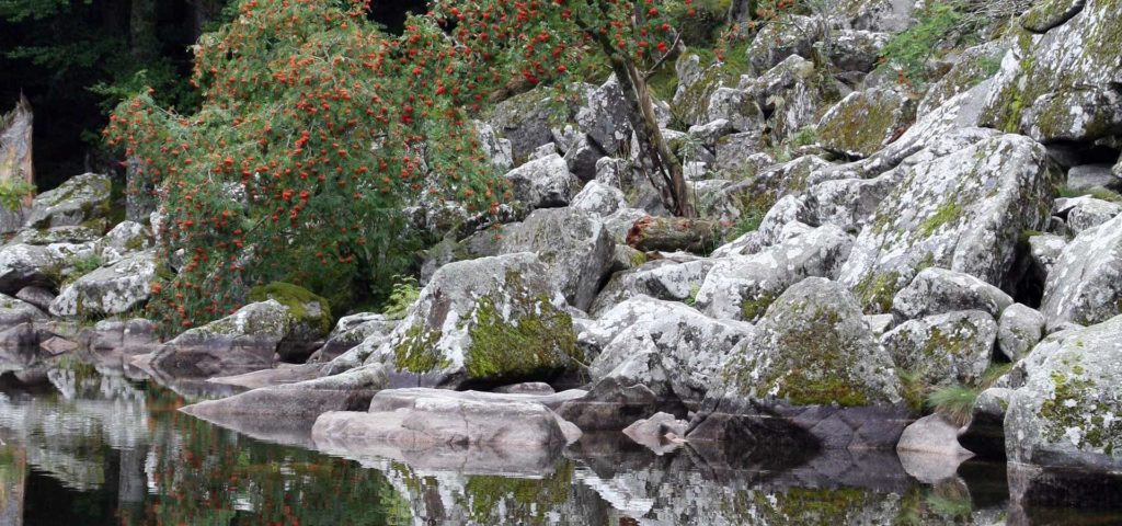 Lac du fiechboedlé